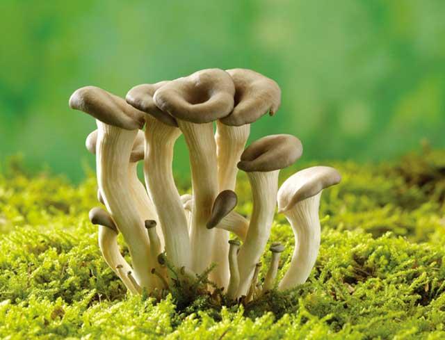 蘑菇栽培管理技术