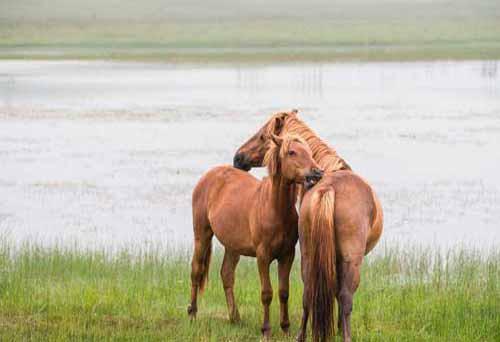 养殖经验:畜禽饲养偏方
