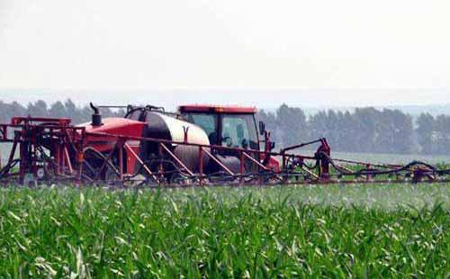种植与增产:营养钵矮化玉米高产技术