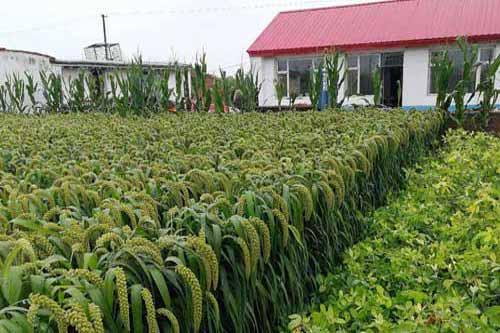 选好种植和养殖品种才能更好发展庭院经济